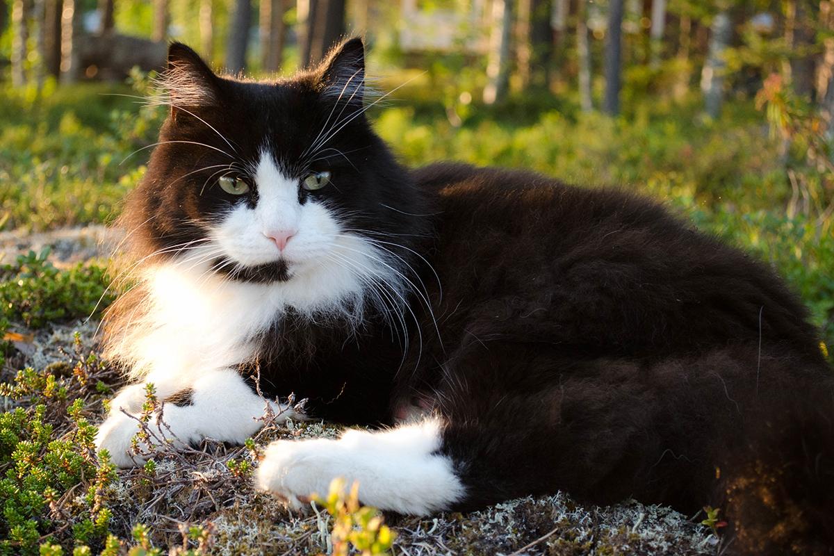 Elder Cat