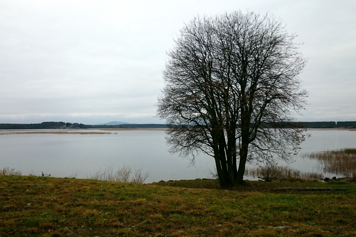 Leafless tree by lake